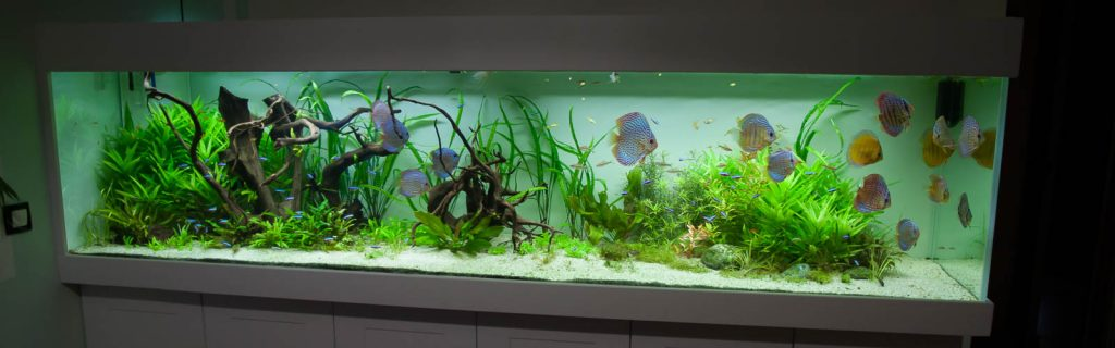 aquarium eau douce 1200 litres e a s endlersman aquariophilie services. Black Bedroom Furniture Sets. Home Design Ideas