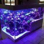 Aquarium récifal de 2500 litres