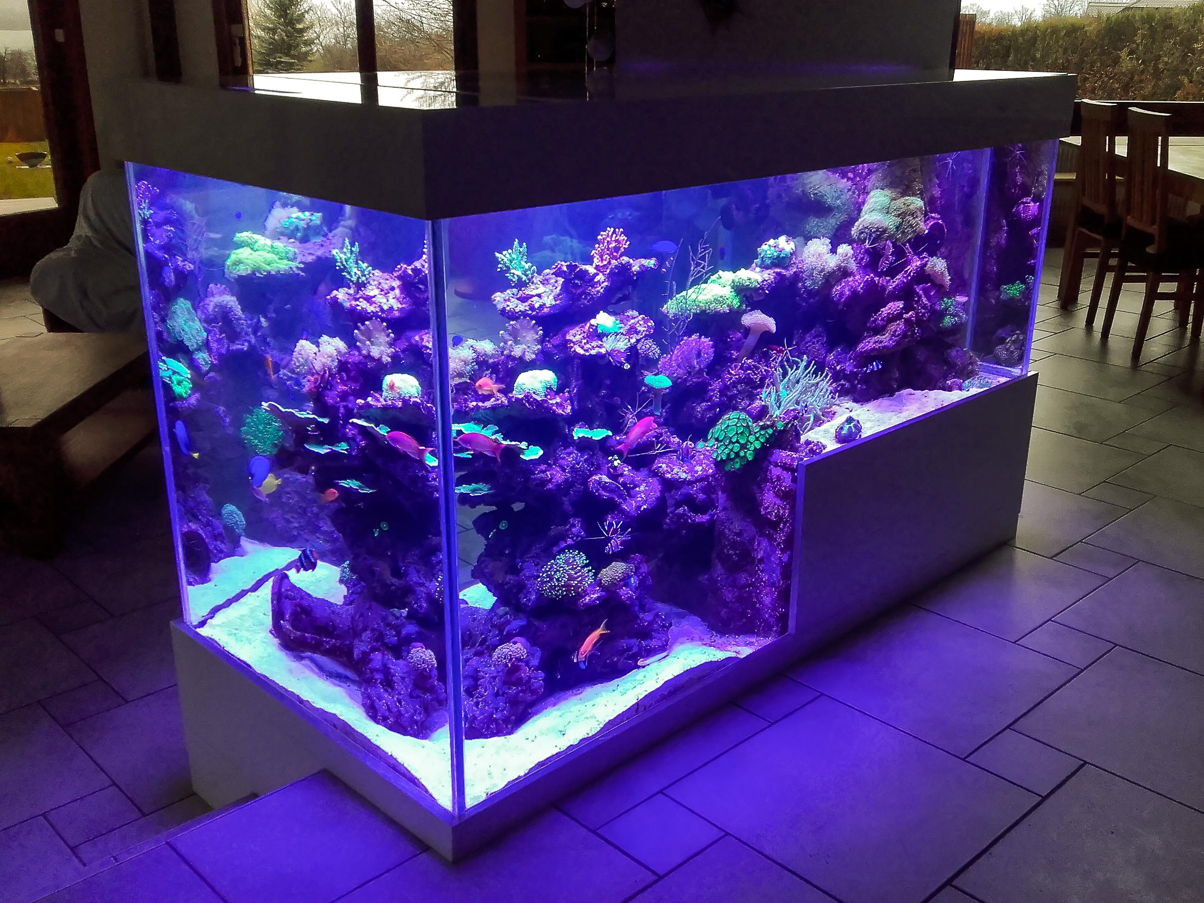e a s endlersman aquariophilie services conception et entretien d 39 aquarium et bassins en. Black Bedroom Furniture Sets. Home Design Ideas
