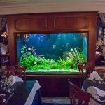 Aquarium 1200 litres planté - Restaurant