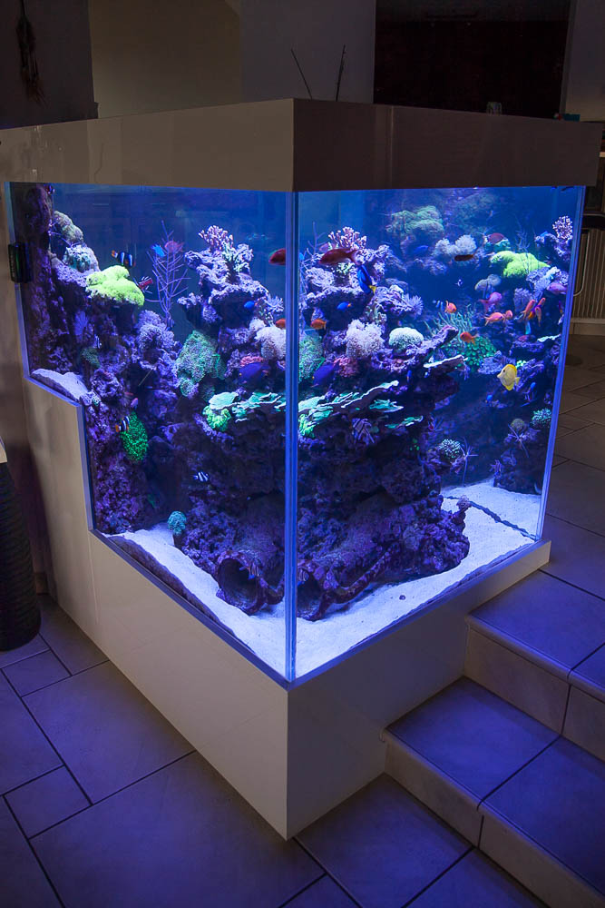 Aquariums e a s endlersman aquariophilie services - Meuble aquarium sur mesure ...