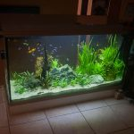 Réfection aquarium 360 litres
