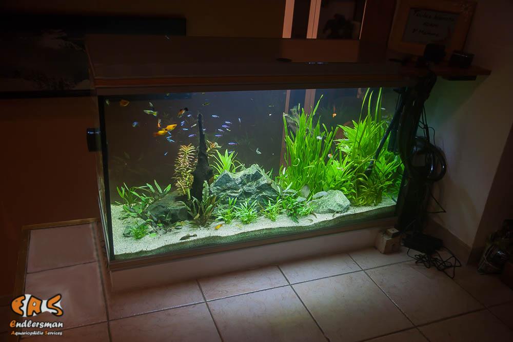 Aquarium 360 litres après réfection