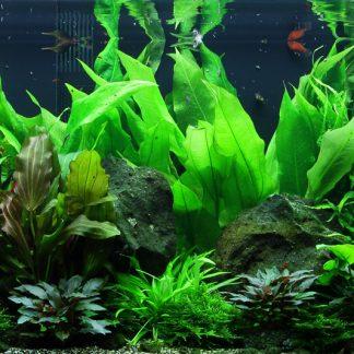 Plantes et algues