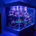 Aquarium récifal 1200 litres