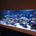 Aquarium récifal de 2500 litres (et cuve technique)