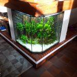 Aquarium eau douce intégré dans une cheminée