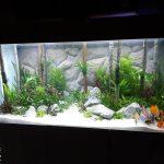 Aquarium à discus de 650 litres